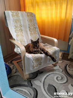 фото: Кресло