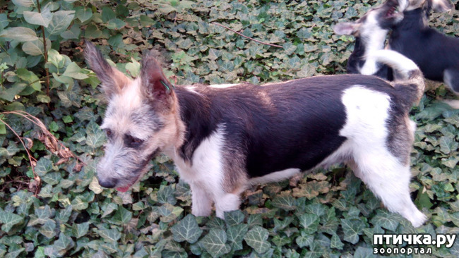 фото 5: Еще один щенок нашел дом