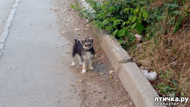 фото 6: Еще один щенок нашел дом