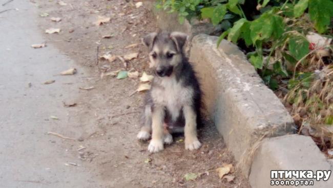 фото 7: Еще один щенок нашел дом