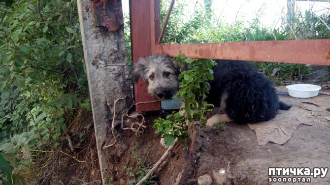 фото 4: Еще один щенок нашел дом