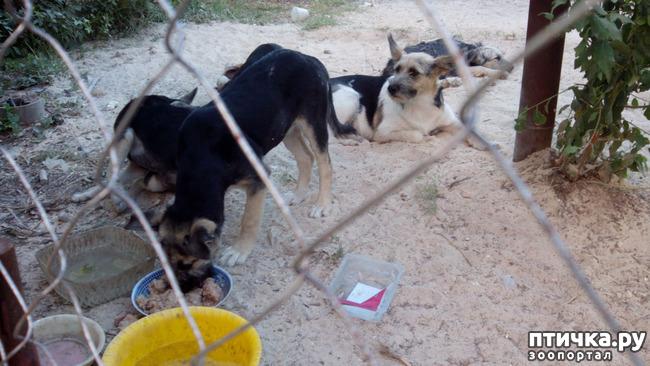 фото 3: Еще один щенок нашел дом