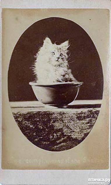фото 2: Фотогод 1870