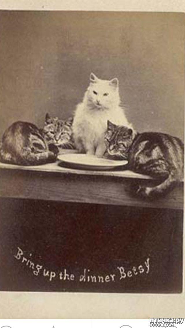 фото 4: Фотогод 1870