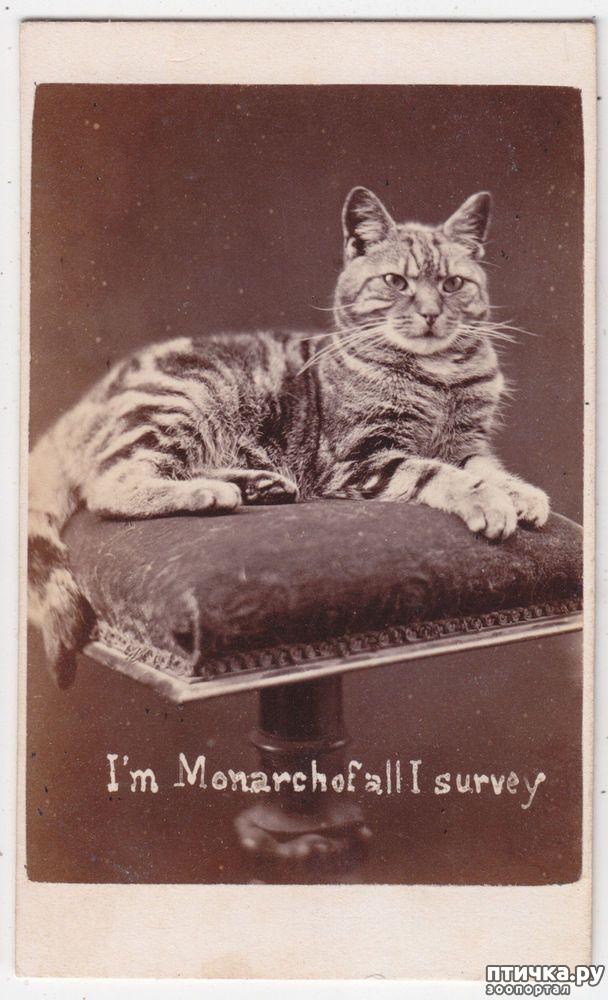 фото 5: Фотогод 1870