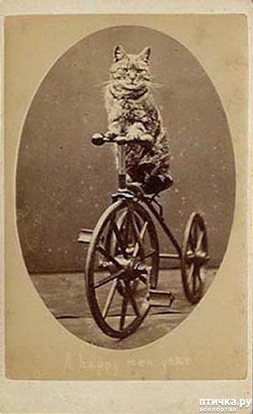 фото 8: Фотогод 1870