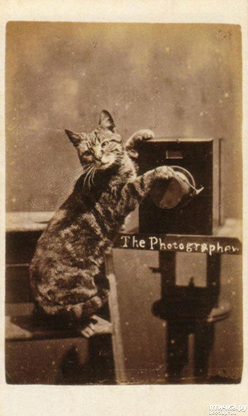 фото 7: Фотогод 1870