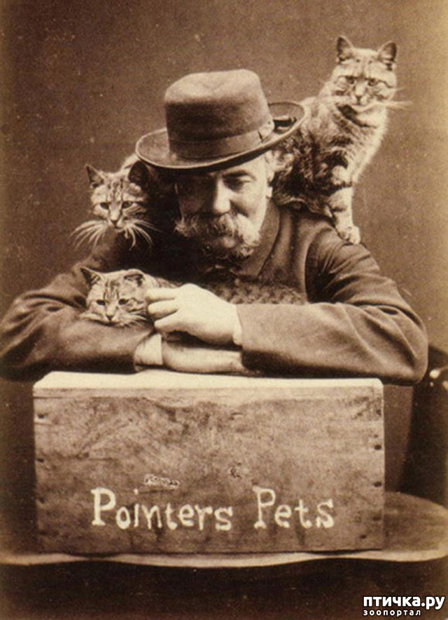 фото 10: Фотогод 1870