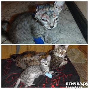фото: Наша Кошечка Соня и кот Васютка