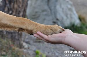 фото: Собаки-правши и собаки-левши.