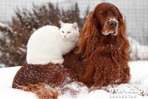 фото: Фото. Снег и пламя.