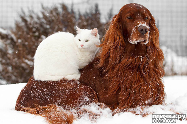 фото 1: Фото. Снег и пламя.