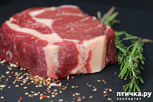 фото 2: Учимся читать состав: а было ли мясо в сухих кормах?