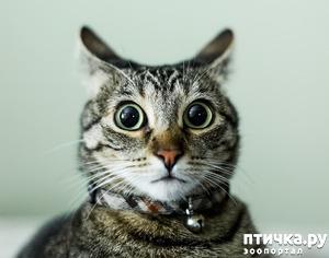 фото: Перепуганный кот)