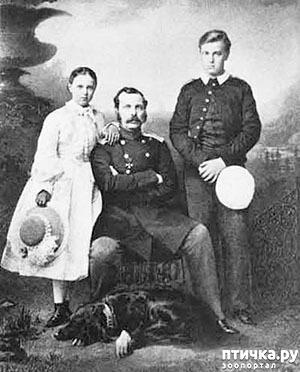 фото 2: Любимая собака Александра II.