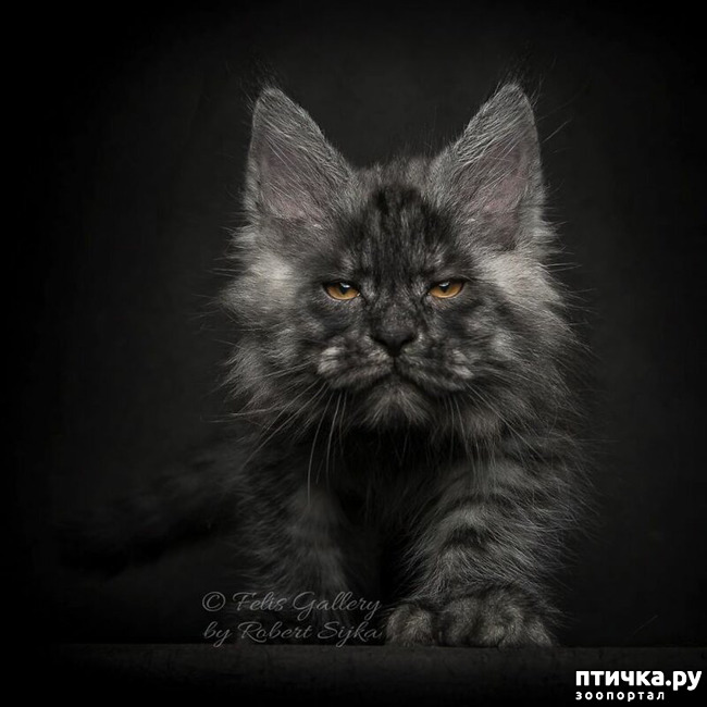 фото 4: Чернее чёрного