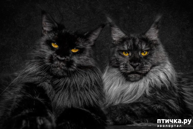 фото 5: Чернее чёрного
