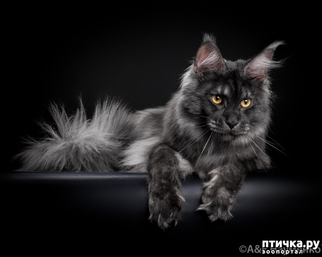 фото 7: Чернее чёрного