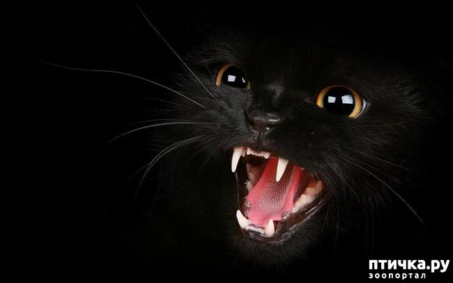 фото 10: Чернее чёрного