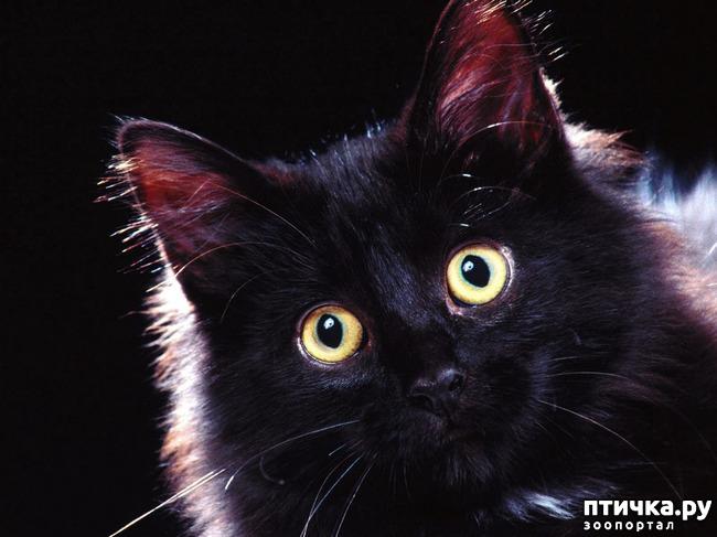 фото 3: Чернее чёрного