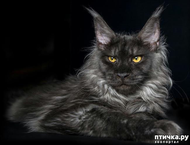 фото 6: Чернее чёрного
