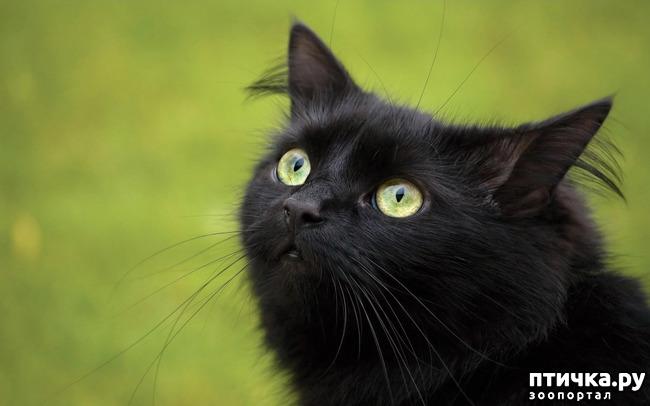 фото 9: Чернее чёрного