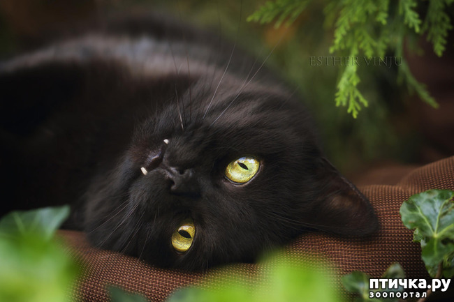 фото 11: Чернее чёрного