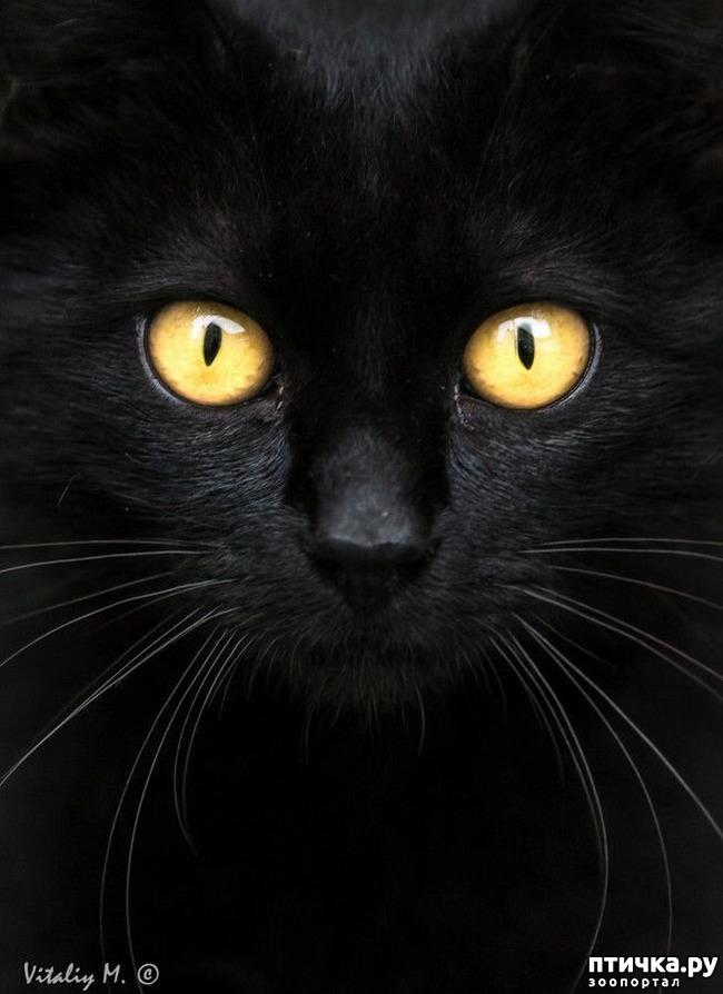 фото 14: Чернее чёрного