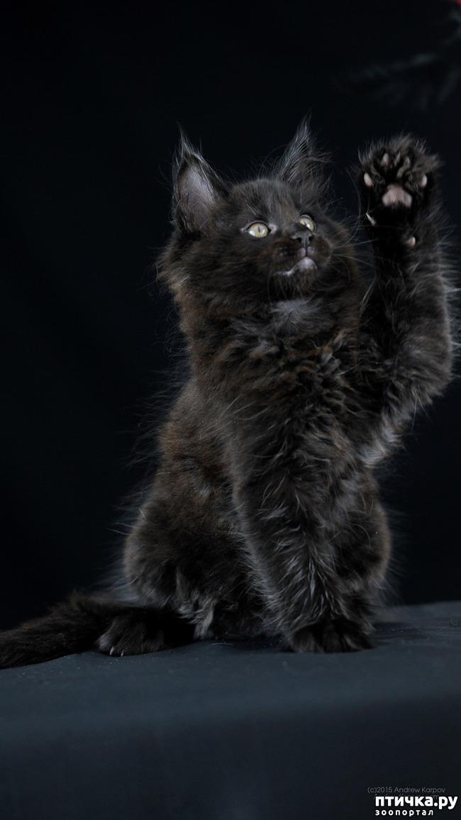 фото 13: Чернее чёрного
