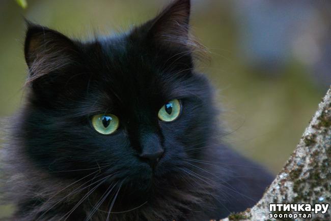фото 15: Чернее чёрного