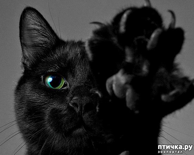 фото 12: Чернее чёрного