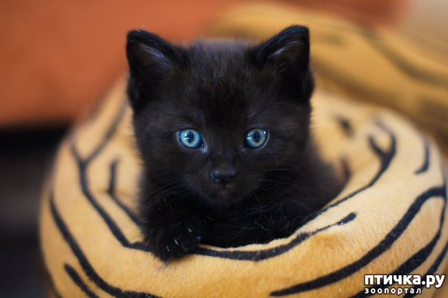 фото 16: Чернее чёрного