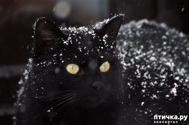 фото 17: Чернее чёрного