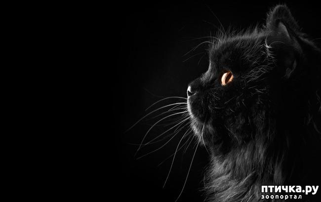 фото 8: Чернее чёрного