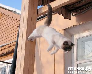 фото: Классификация домашних котов и кошек)))