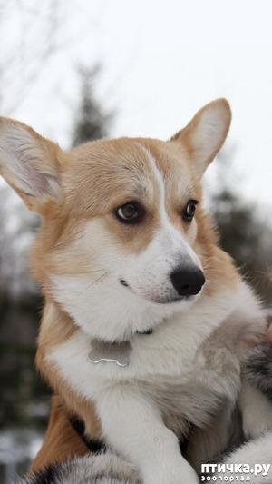 фото: Про собаку и не только... Рассказ о нас, собаководах, и людях вокруг