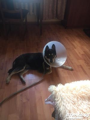 фото: Собакен дома!