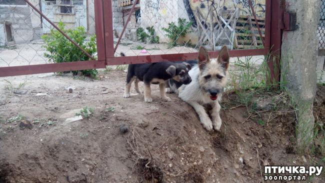фото 3: Собако-кошачьи новости