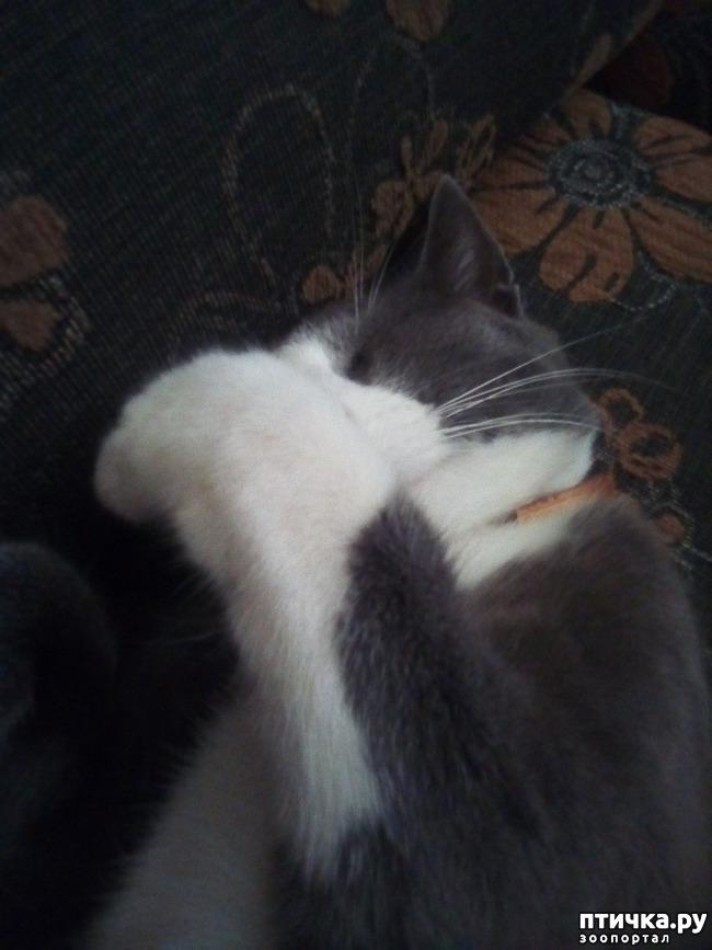 фото 2: В непогоду классно спать...