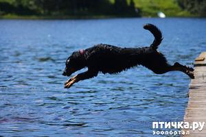 фото: Где купаться с собакой?