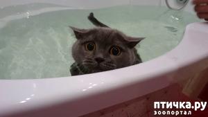 фото: О воде и кошках.