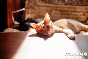 фото: Кошечкин-Дракошечкин - фотомодель!:)