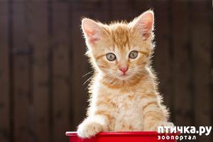фото: Котенок из люка: красавчонок-жмякалка