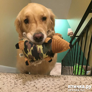 фото: Признаки собачьей любви.