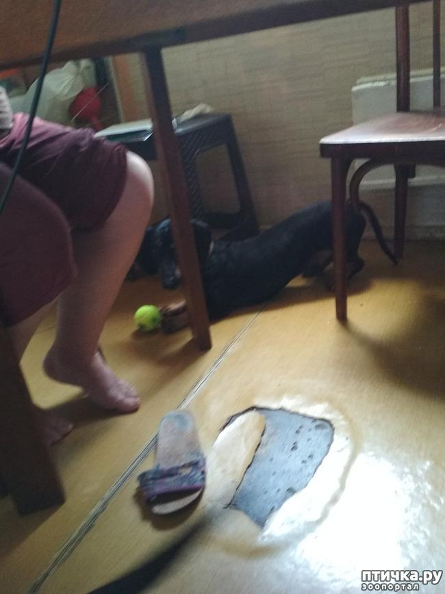 фото 3: Как мы с собаками сходили на прививку.