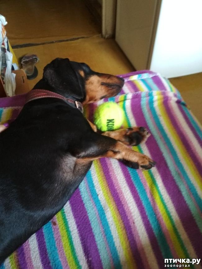 фото 6: Как мы с собаками сходили на прививку.