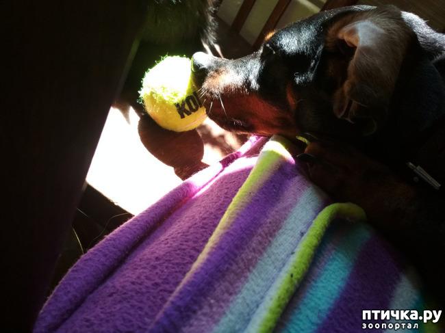 фото 7: Как мы с собаками сходили на прививку.