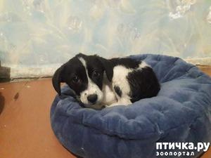 фото: Новости про собак