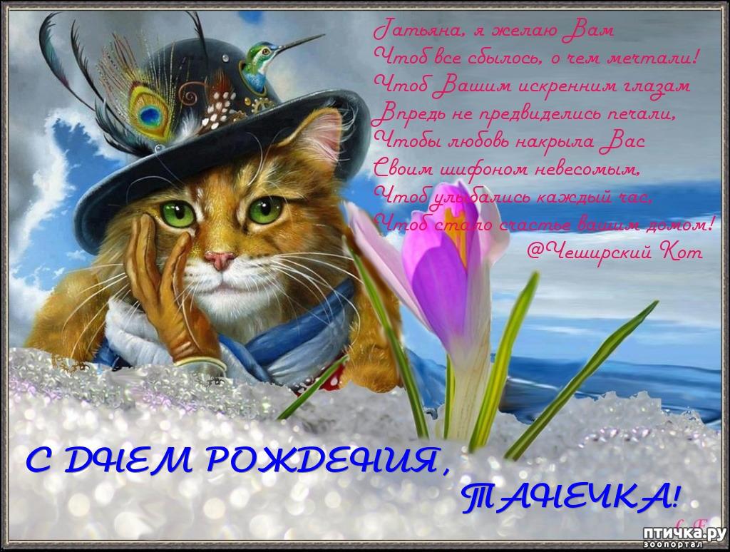 Поздравление от имени кота
