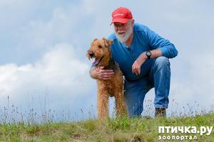 фото: Пять заблуждений о дрессировке, которые портят жизнь и собакам, и хозяевам